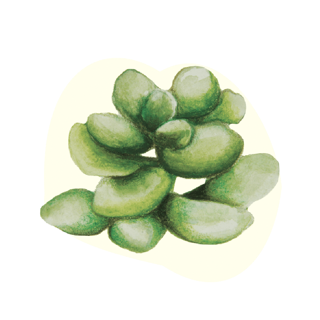 varietà-piante-grasse